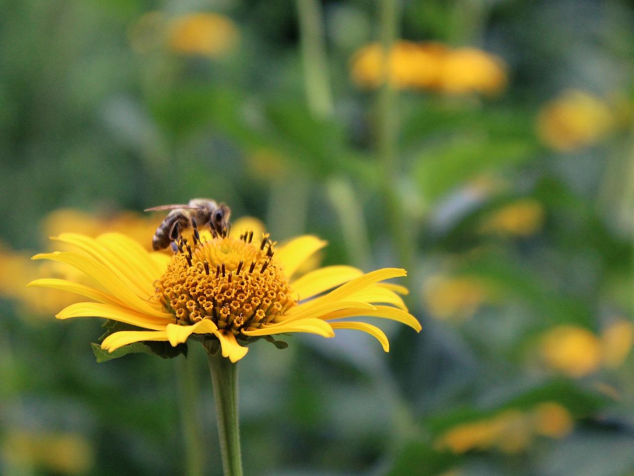 flower-882124_1280